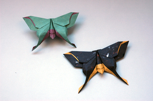Origami Database - Model - The Mudarri Luna Moth - photo#24
